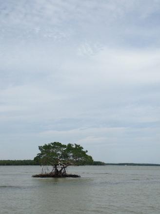 Mangrove!
